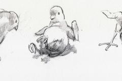 Chicks - 02
