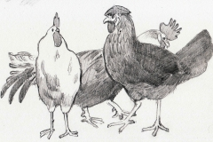 Gaggle of Roosters