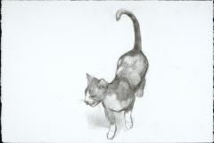 Renaissance Cat