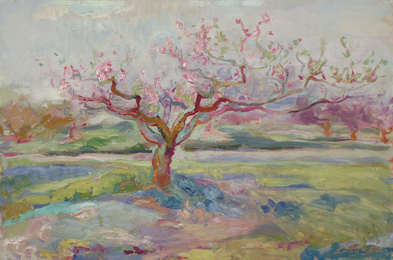 Peach Tree Blooming