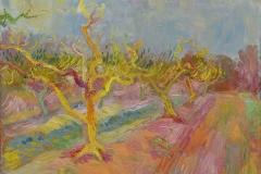 Yellow Peach Trees